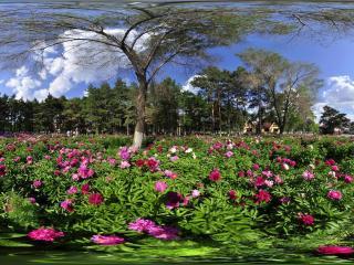 长春南湖公园虚拟旅游