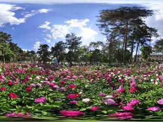 长春南湖公园 NO.8