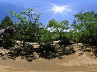 硅化木森林公园 NO.5全景