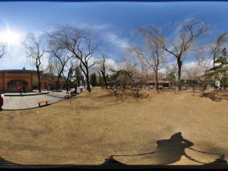 动物园樱花全景
