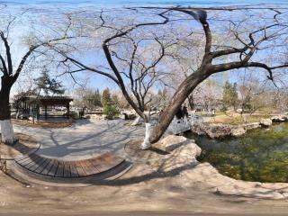 宣武艺园桃花树