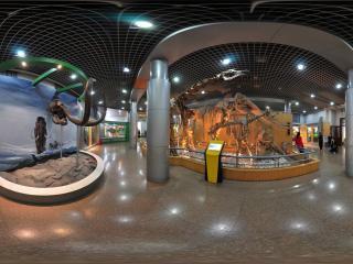 自然博物馆恐龙化石标本