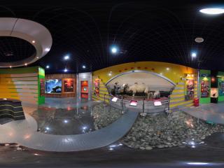 自然博物馆骆驼标本