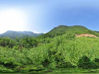 妙峰山 后山树林