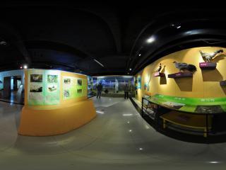黑龙江省博物馆之蛋禽类展(一)