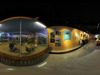 黑龙江省博物馆之蛋禽类展(二)