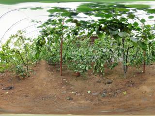 葫芦山庄采摘园