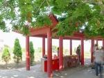 葫芦岛觉华岛之菩提树全景