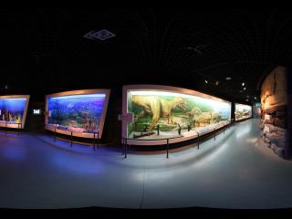 甘肃省博物馆的古生物馆