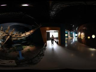 甘肃省博物馆之恐龙化石馆