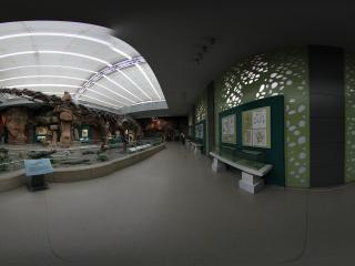 甘肃省博物馆之马门溪龙