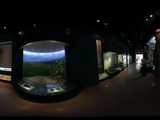 甘肃省博物馆之原始生物展馆