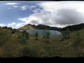 天池山坡上的牛群