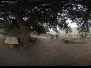 月牙泉的古胡杨树