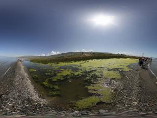 青海湖边沼泽地