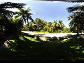 三亚南山文化苑热带植物林