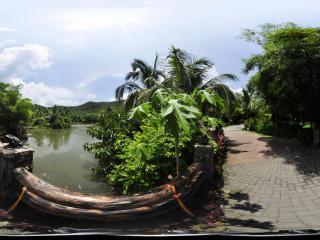 三亚呀诺达热带雨林锦鲤