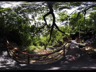 三亚呀诺达热带雨林栈道
