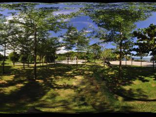 三亚天涯海角热带植物林
