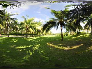 三亚天涯海角椰树林
