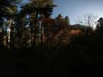 九寨沟森林日出全景——九寨沟原始森林早晨的日出!全景