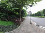 广州长隆绿荫边的街道全景