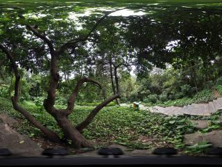 广州越秀公园路边怪树