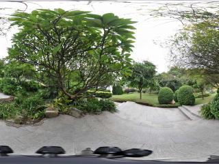 广州云台花园绿色植物