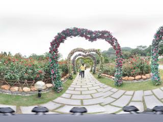 广州云台花园花坛