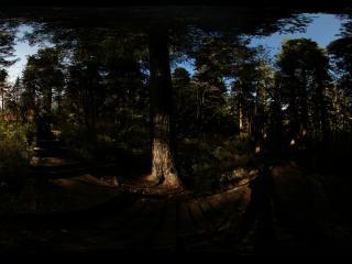 九寨沟草海密林中的日出