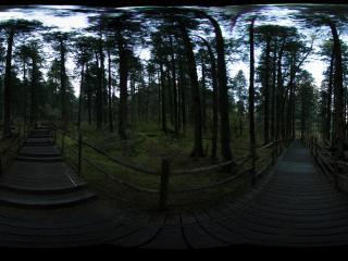 九寨沟幽静的原始森林