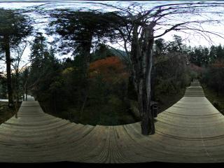 九寨沟原始森林秋染层红