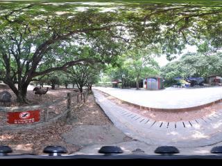 深圳野生动物园鸵鸟区