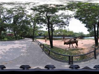 深圳野生动物园骆驼