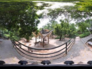 深圳野生动物园斑马