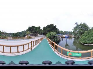 深圳野生动物园水中孔雀