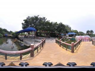 深圳野生动物园黑天鹅