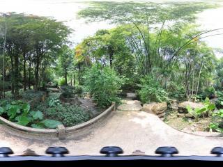 深圳野生动物园竹林