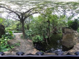 深圳野生动物园里的湖水
