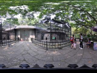 深圳野生动物园金丝猴
