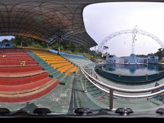 深圳野生动物园海豚表演