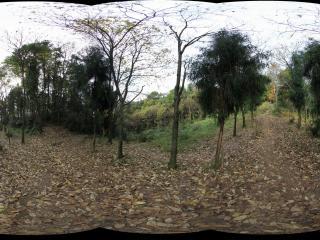 青城山全真观上去分路到老君阁走小路的林间落叶