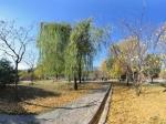 北京植物园 秋景NO.16