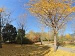 北京植物园秋景NO.15