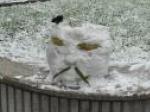 2011第一场雪 中关村街区全景