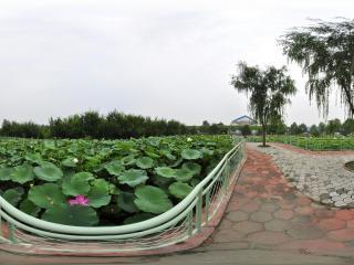 北京 温室公园 NO.45