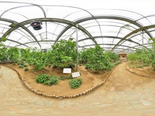 温室公园虚拟旅游