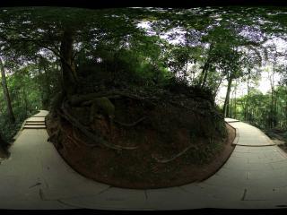 青城山 天然图画上去的林荫