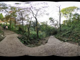 青城山 全真观下面的小道