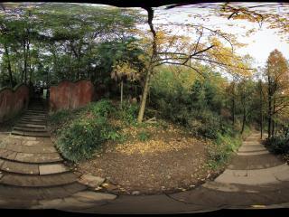 青城山 全真观上去的林荫小道